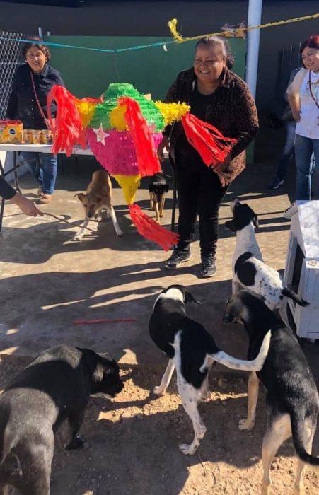 Perritos alrededor de la piñata jugando en una posada