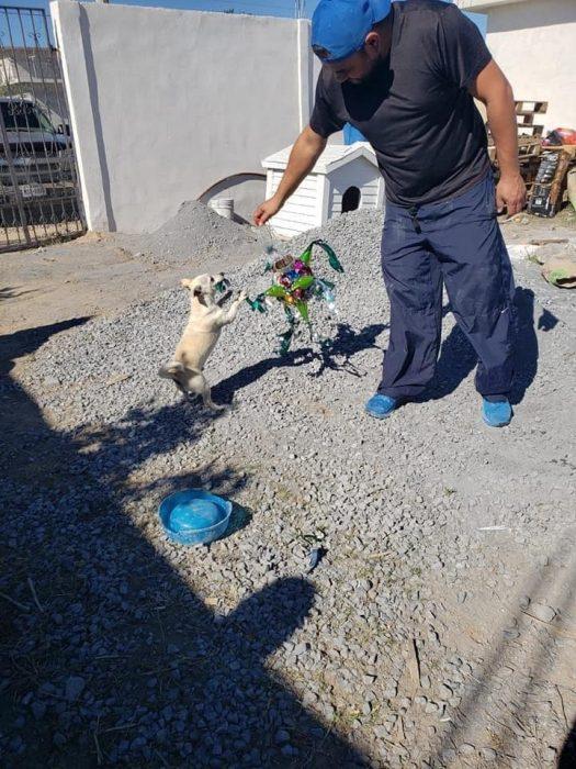 Perrito jugueteando con una piñata navideña