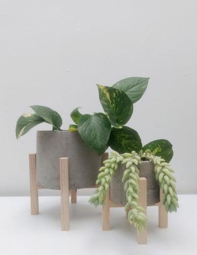 Plantitas para decorar el escritorio