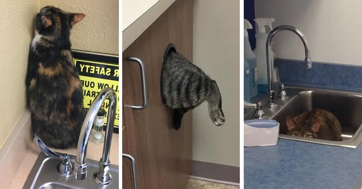 15 Gatos a los que nos les gusta ir al veterinario y trataron de esconderse sin éxito