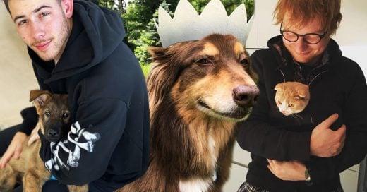 15 Adorables cuentas de las mascotas de tus celebridades favoritas