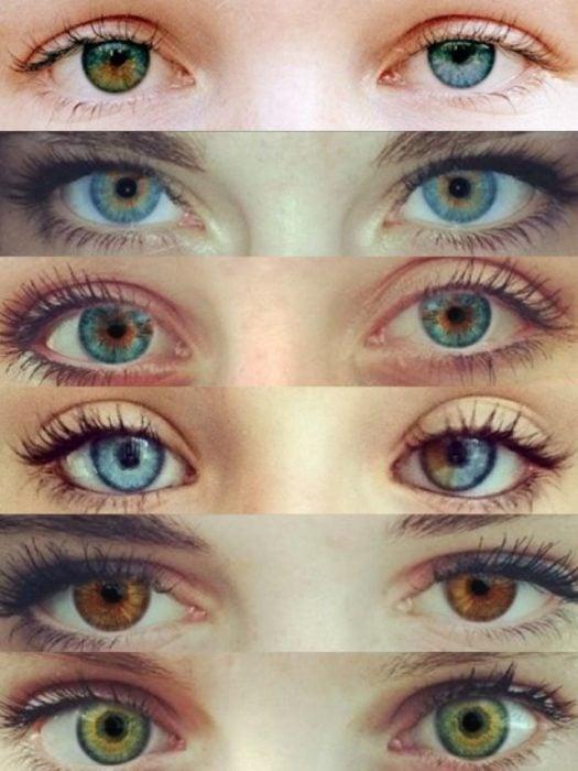 Ojos de diferentes colores