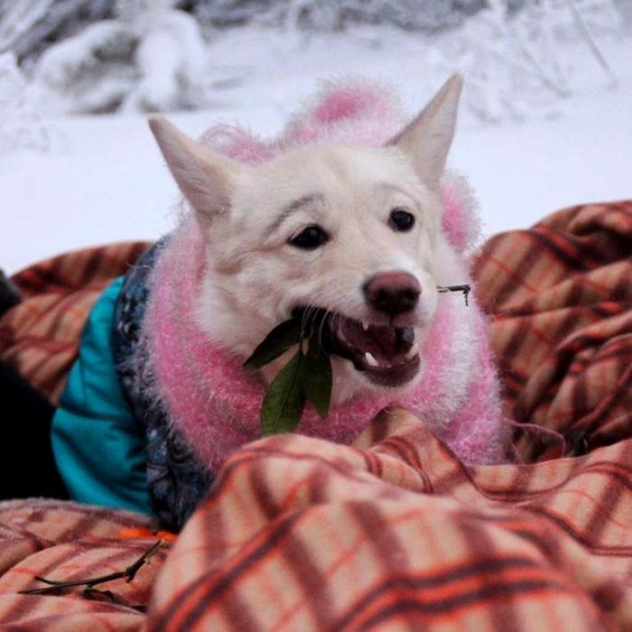 Betty, la perra con cejas; cachorra blanca en la nieve
