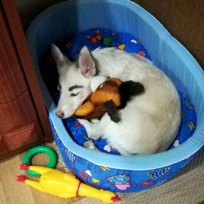 Betty, la perra con cejas; cachorra dormida con un peluche