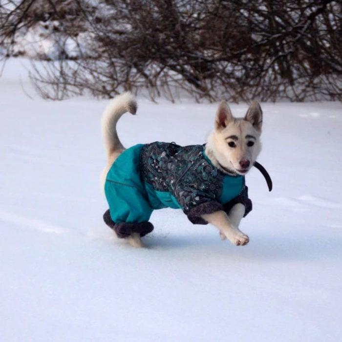 Betty, la perra con cejas; cachorra jugando en la nieve con suéter azul