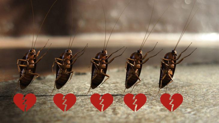 Cucarachas bailando sobre el asfalto