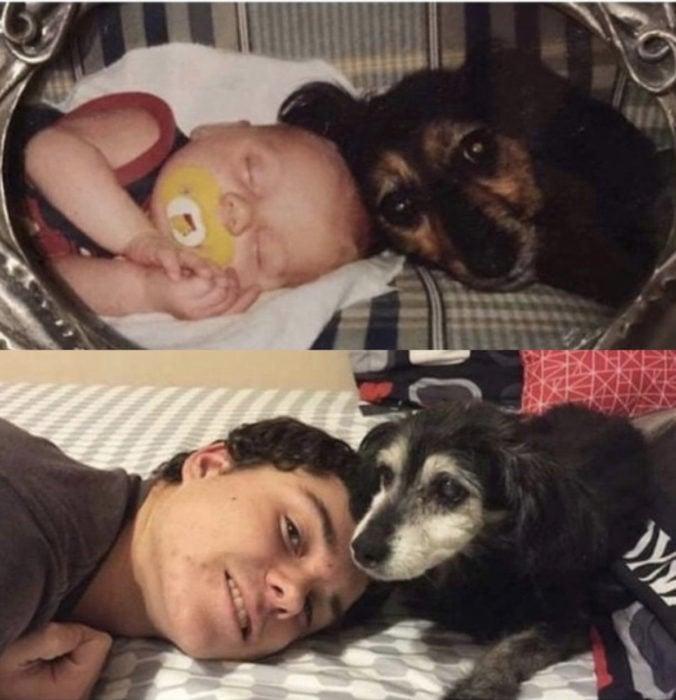 Antes y después de humanos con sus mascotas; bebé y perro