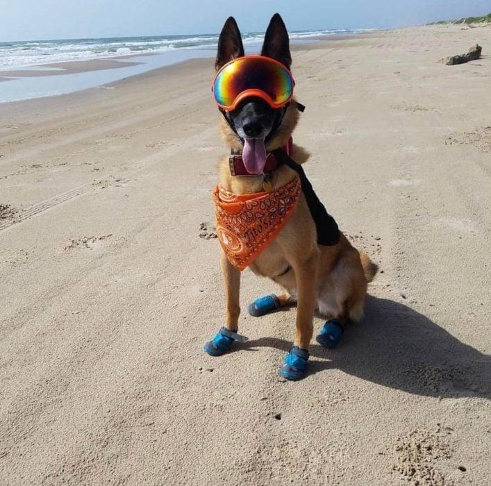 Perrito que ayuda a incubar los huevos de tortuga en las playas