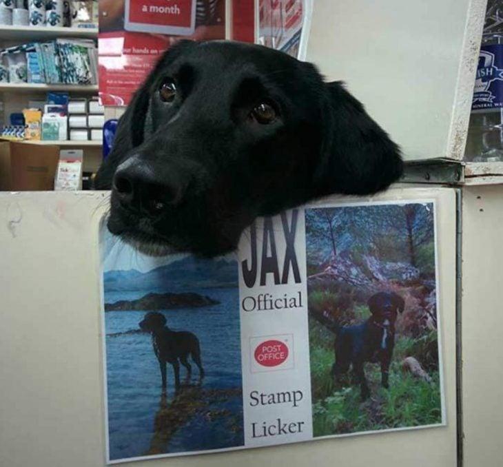 Jax el perro que trabaja en la oficina postal