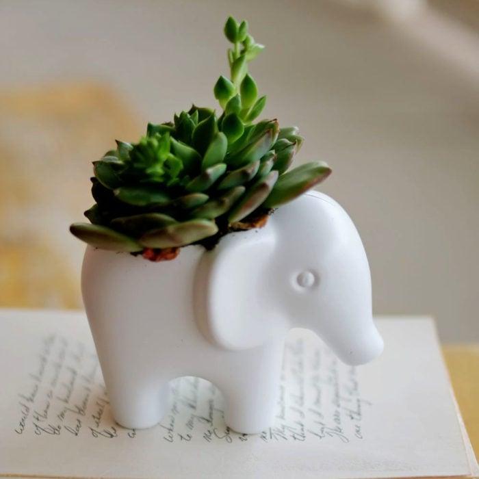 Macetas tiernas y originales de animales; elefante
