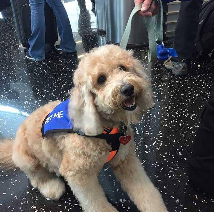 Perrito de compañía en el aeropuerto