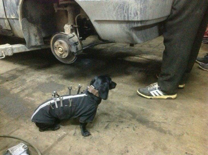 Perrito salchicha ayudante de mecánicos