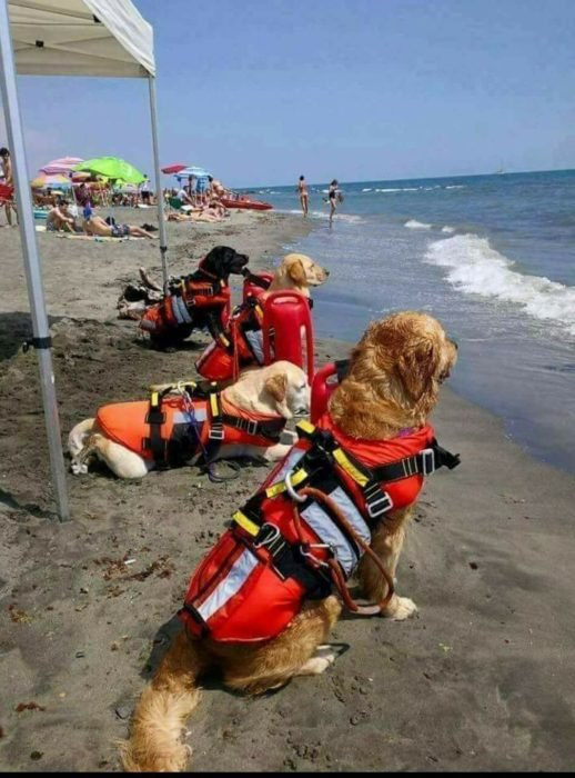 Perritos salvavidas de Croacia