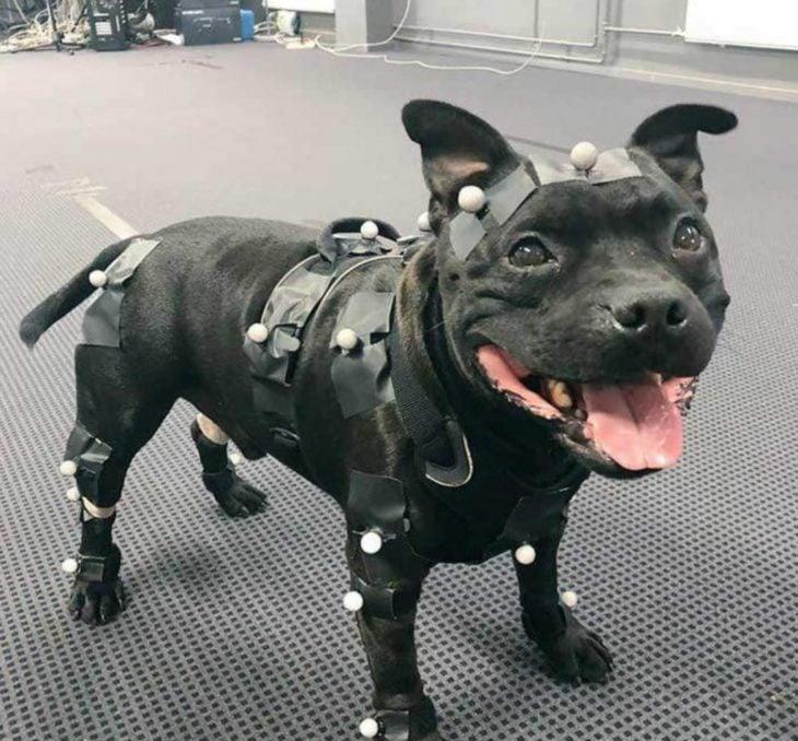 Uuno perrito que trabaja desarrollando videojuegos