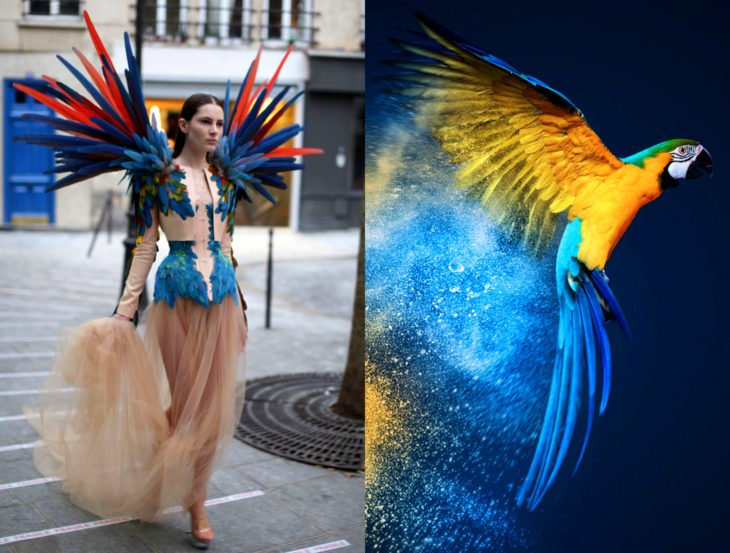 Vestidos inspirados en la naturaleza; vestido de loro azul, cacatúa