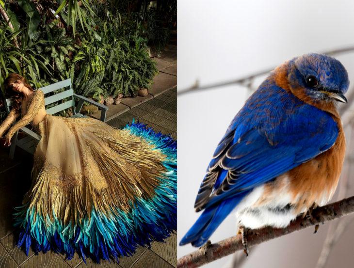Vestidos inspirados en la naturaleza; vestido café y azul, p´jaro azulado con marrón