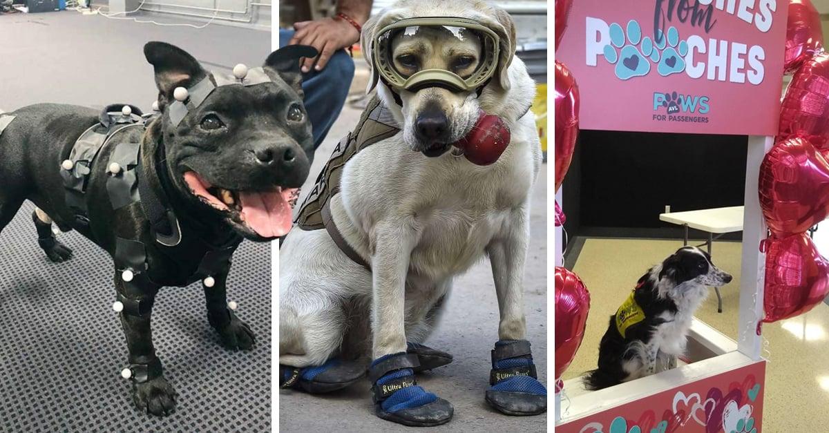 15 Lindos perros que tienen trabajos asombrosos