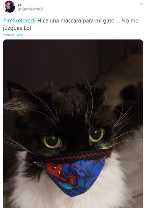 Captura de Twitter con fotografía de gatito con cubrebocas