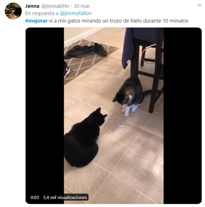 Captura de Twitter con fotografía de dos gatos mirando un hielo