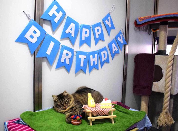 Hicieron fiesta de cumpleaños a gata para que fuera adoptada y nadie asistió