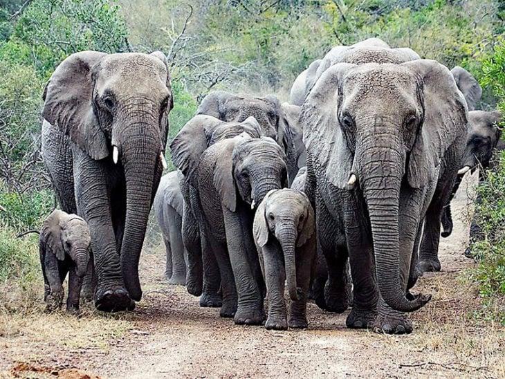 Manada de elefantes del refugio de Thula Thula