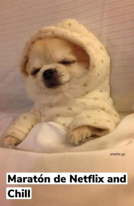 Memes de perritos explicando qué hacer en la cuarentena; perro dormido con mameluco