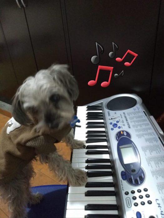 Versión de ramito de violetas cantada por perritos