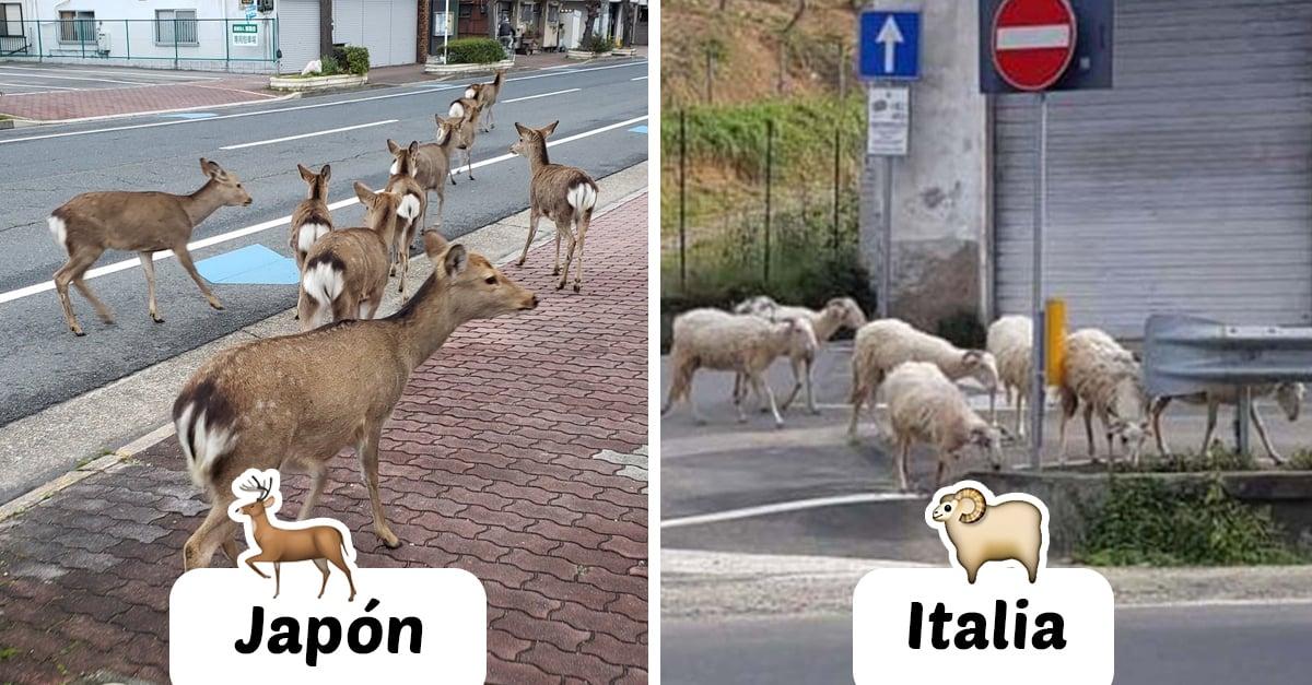 Tras cuarentena, animales pasean por las calles vacías de las ciudades