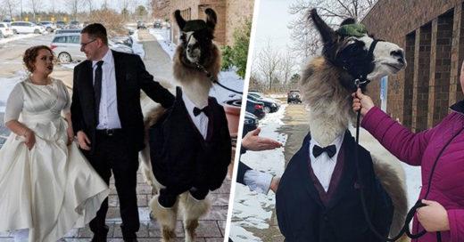 Este chico llevó una llama con esmoquin a la boda de su hermana