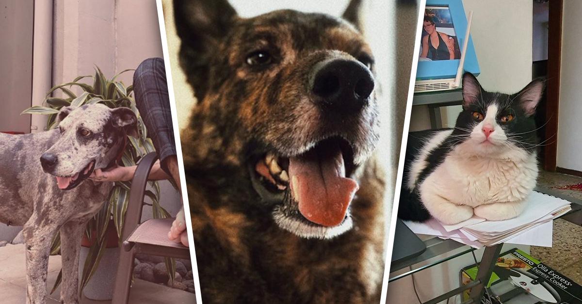Mascotas están felices de que sus dueños están en casa y estos tuit lo demuestran