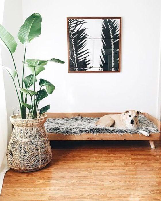 Mascotas en casa según fen shui