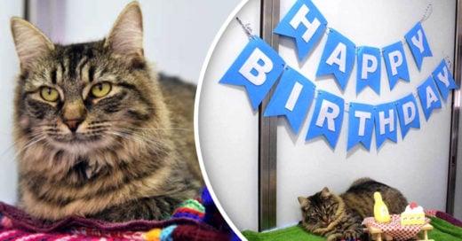Nadie asiste a la fiesta de adopción de esta gatita; era su cumpleaños