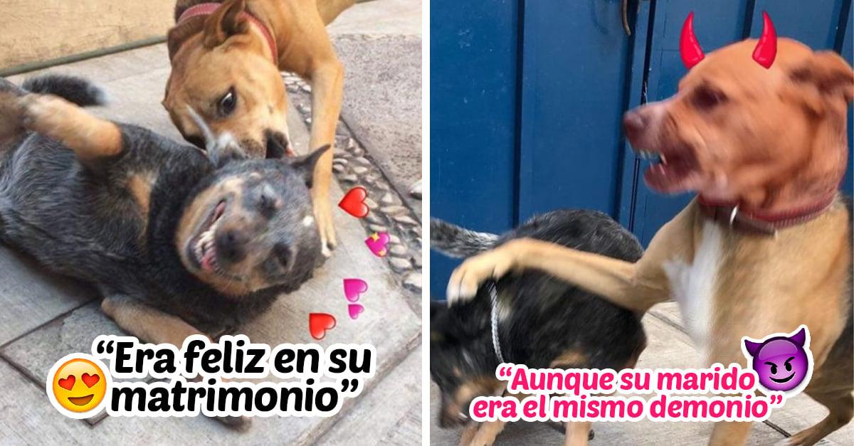 Estos perritos relataron Ramito de violetas; es lo mas hermoso que verás hoy