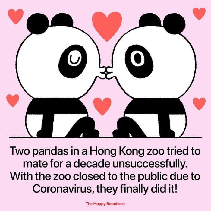 Ilustración de noticia positiva sobre pandas