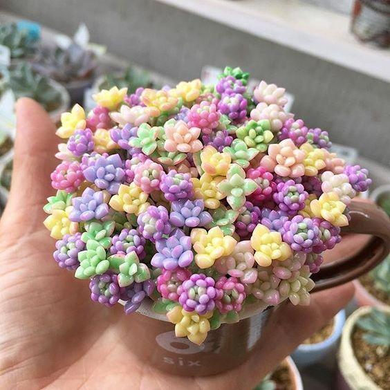 Macetas de colores pastel dentro d una taza café