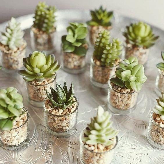 Vasitos con plantas suculentas miniaturas