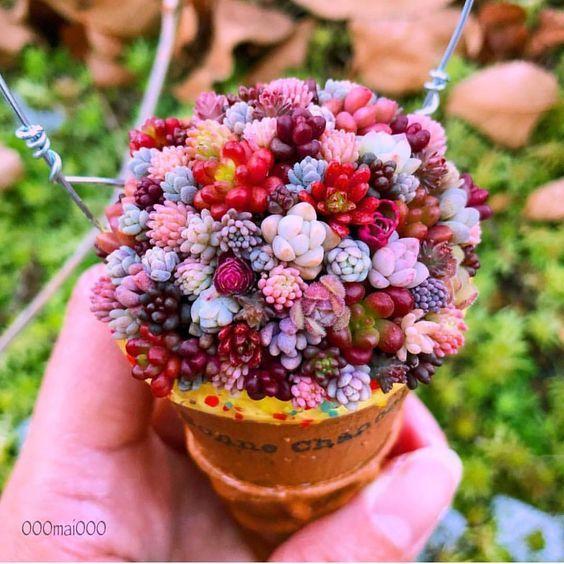Minisuculentas de colores en una maceta de mano