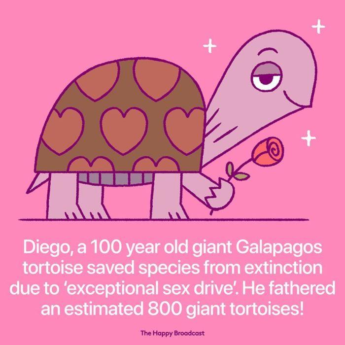 Ilustración de noticia positiva sobre tortuga