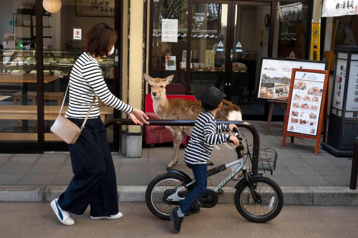 Ciervos en las calles de Japón