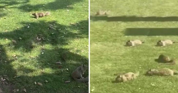 Decenas de ardillas en los parques de Santa Monica