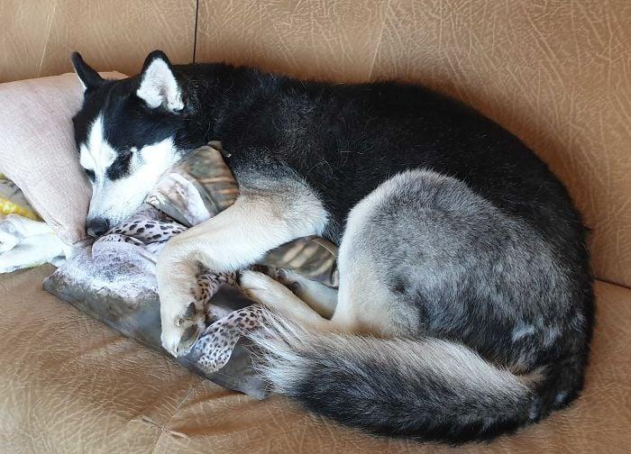 Animales acompañan a sus dueños en la cuarentena