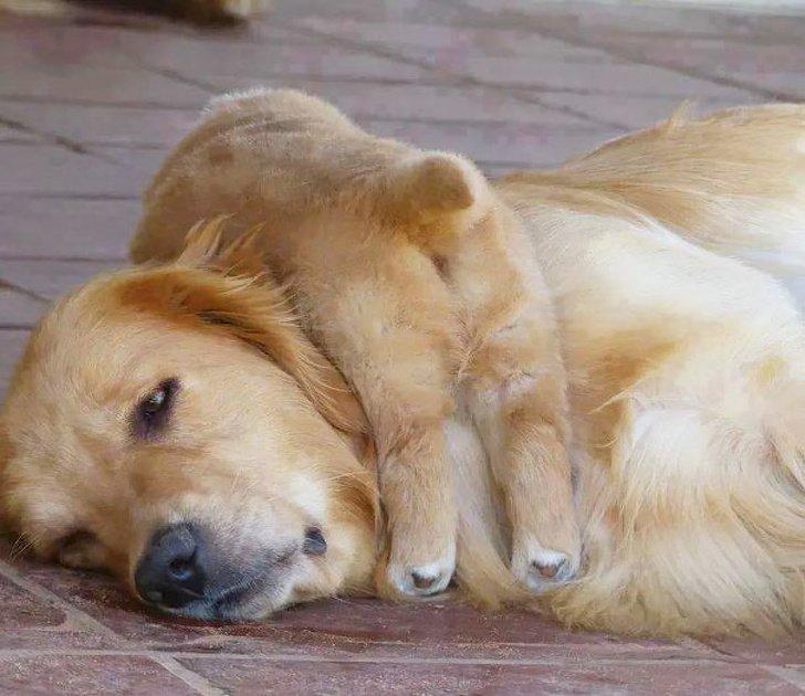 Animalitos junto a sus cachorros jugando y abrazándolos