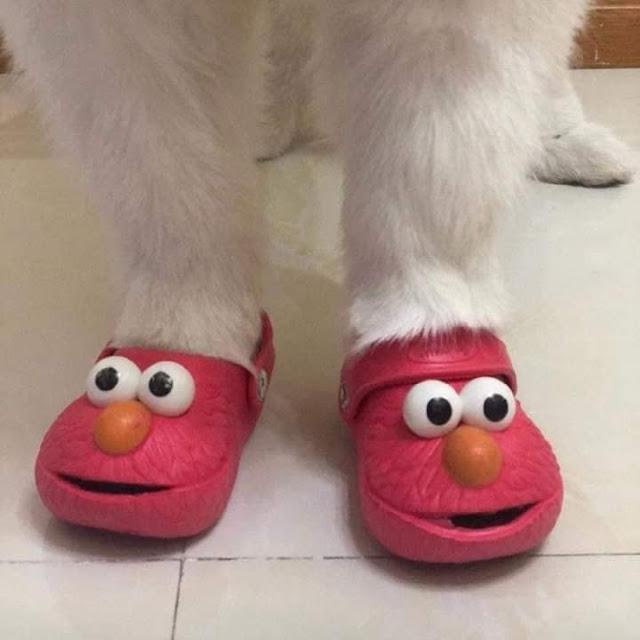Perrito usando unos crocs de Elmo en color rojo