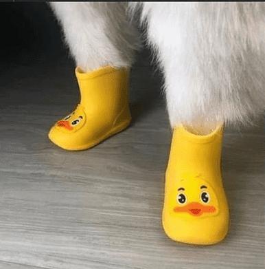 Perrito usando unas botitas de hule de color amarillo
