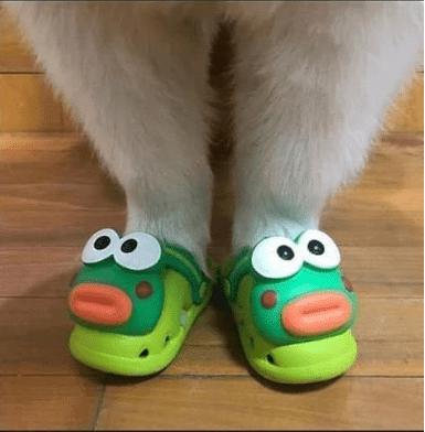 Perrito usando unas sandalias de sapo