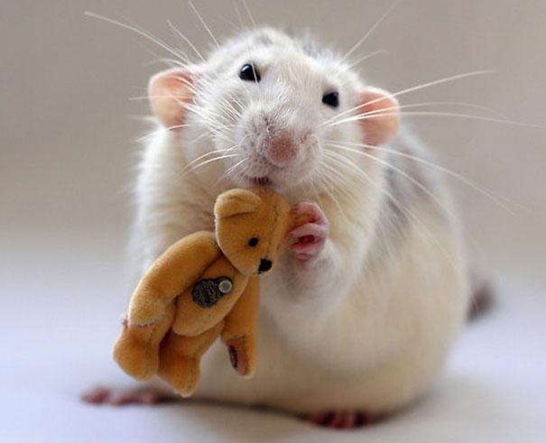 Fotógrafas toman fotos de ratas muy tiernas