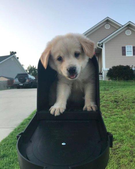 Perro tiene como mejor amigo un ladrillo