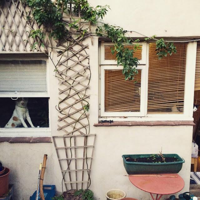 ¿Podrás encontrar al gatito en cada foto?