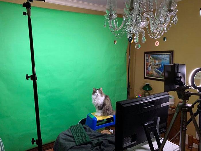 Betty la gatita sentada en un banquito de madera