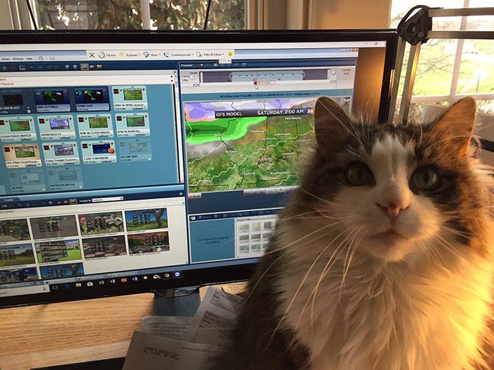 Betty la gatita sentada frente al monitor en una computadora